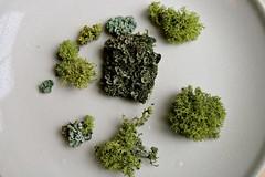 Lichen Terrarium