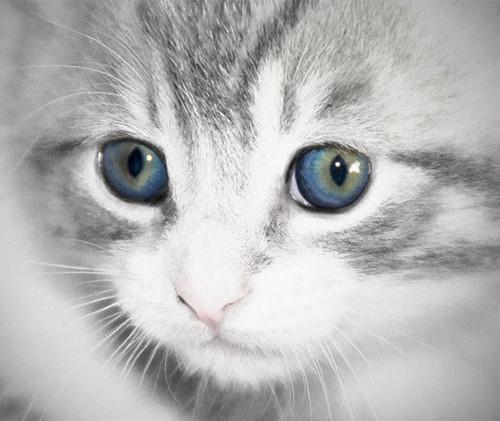 Blue Eyes by drobi_123
