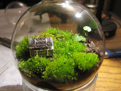 Treasure chest and moss terrarium