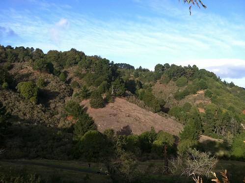 Dogpark tree hill