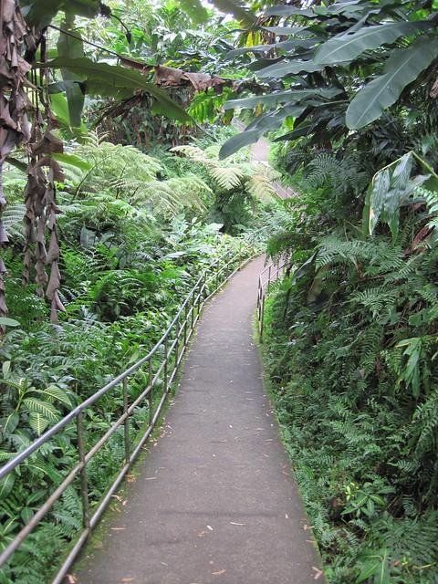 Picture from Akaka Falls, Hawaii