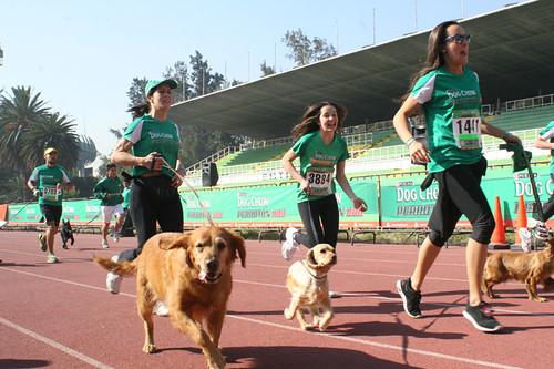 Perroton Dog Chow 2015