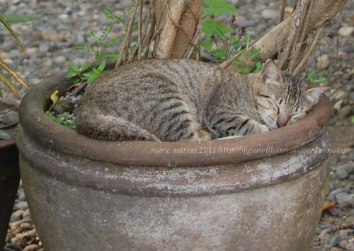 Cat in the Pot