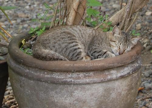 Cat in the Pot