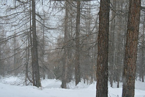 Saas Fee snow