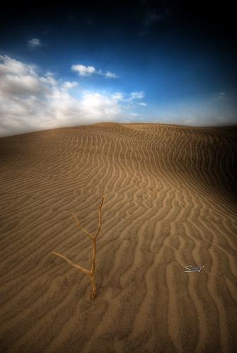 - by Saeed al alawi