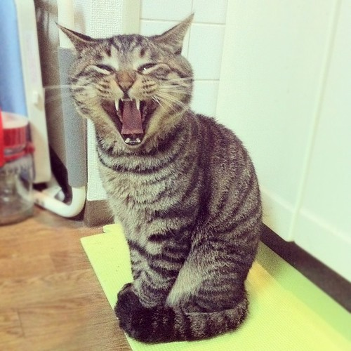 夜ムサシ。キャー! #mck #cat