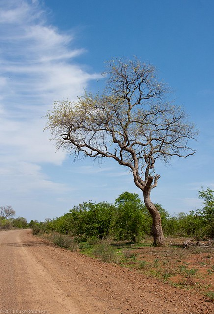 Kruger Park - The Lonely Road
