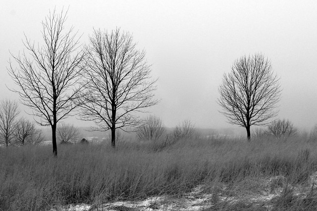 Cold Morning Walk B&W