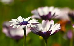 Just flower !
