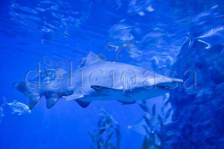 Bangkok - rechin (1 of 1)