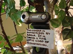 Camera on tree