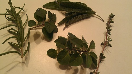 rosemary, oregano, thyme, sage
