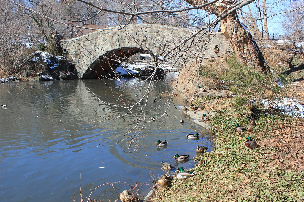 Bridge in Central Park February 2011