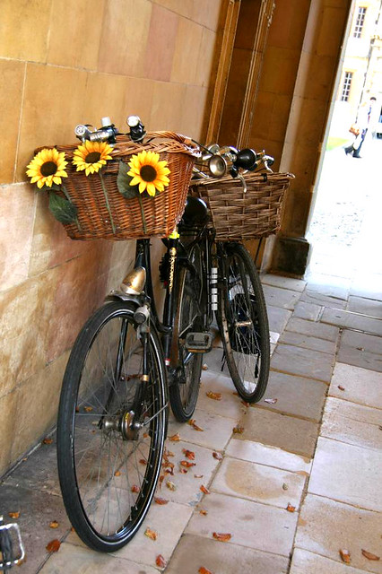Sunflower Cambridge  Bike