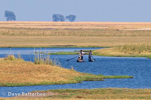 Chobe River Life