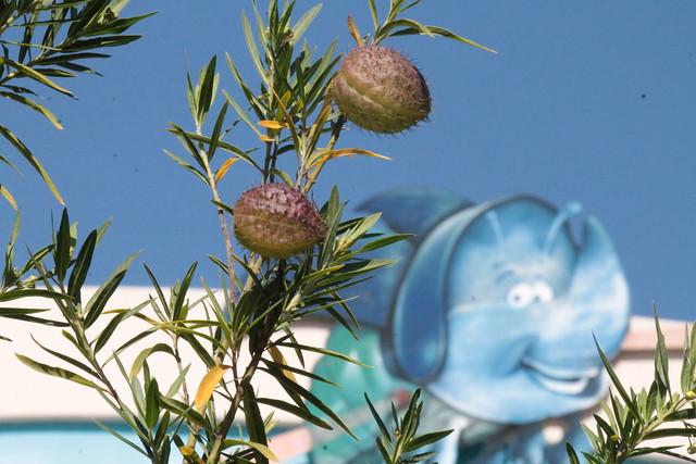Dim the flying rhino bug