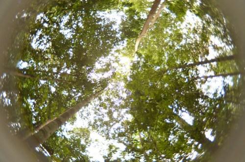 The Rainforest Beauty