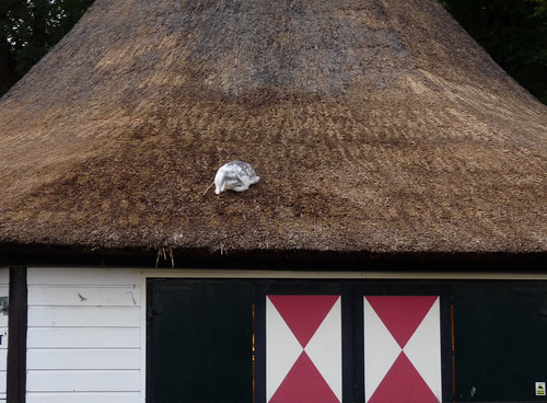 Bunny on the theehuis roof