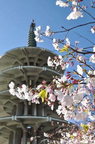 2012 Cherry Blossom Festival