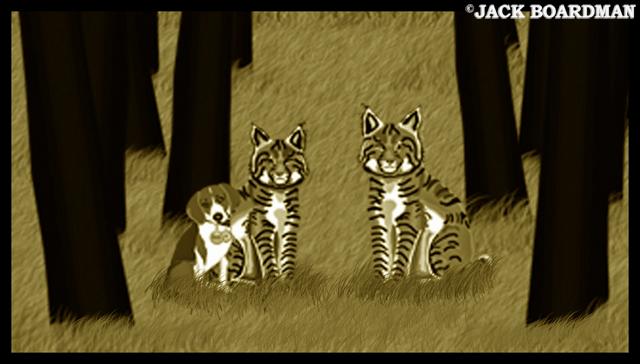 Sentient wildcat found ©2012 Jack Boardman