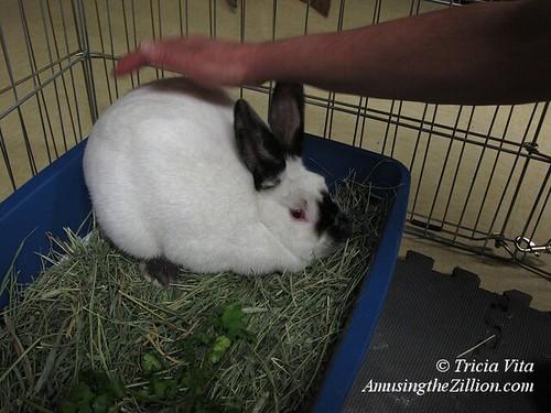 Steeplechase the Coney Island Bunny