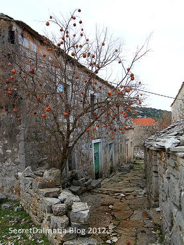 Dried pomegranates on the trees