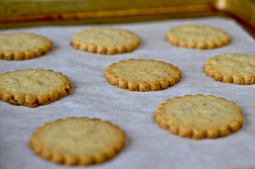Chocolate Hazelnut Shortbread Cookies 10