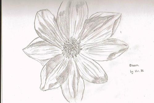bloom - v