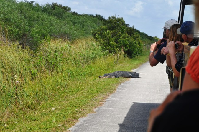 Shark Valley, Everglades National Park, Feb. 27, 2012