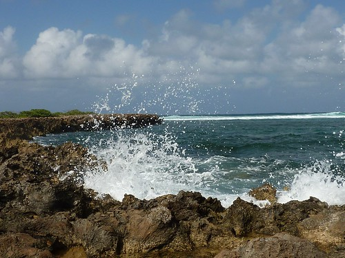 turtle bay splash