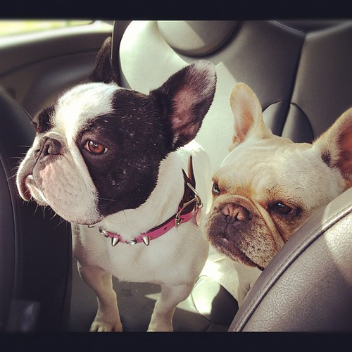 Backseat drivers