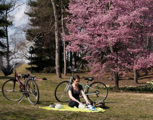 bikes, picnics & central park