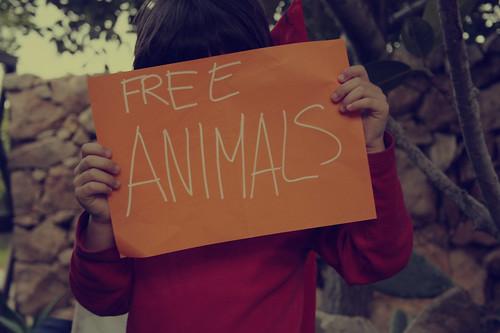 free animals by Rossella Sferlazzo