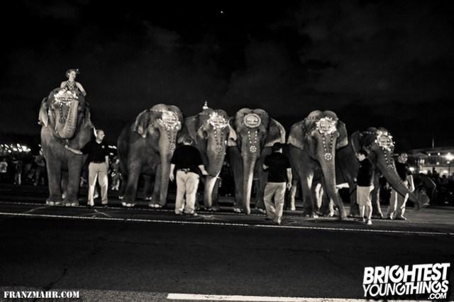 12-03_elephants119-37