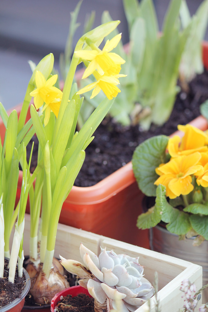 Flores en la terraza