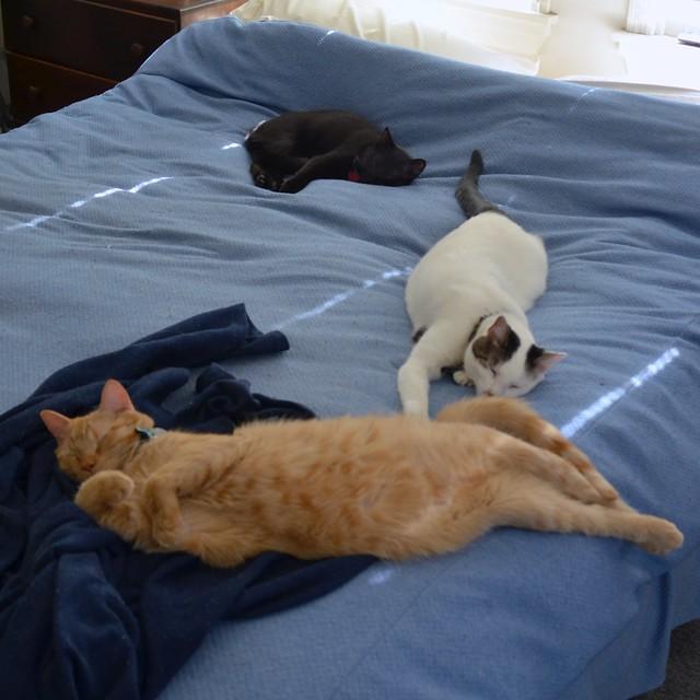 All Three Dozing