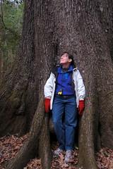 Sue Enthralled by the Cherrybark Oak