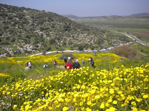 Wildflower Fields - Beit Shemesh Israel