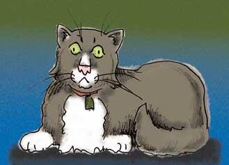 graycat