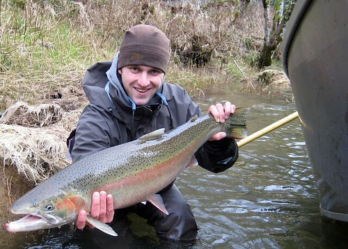 Oregon Winter Steelhead, cropped