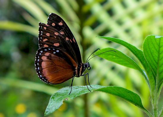 6979846037_7c99e61260_z Jardin Botánico del Quindío - Armenia, Colombia Colombia Zona Cafetera  Zona Cafetera Quindio Nature Mariposario Guadua Garden Colombia Butterfly Botanical Bamboo