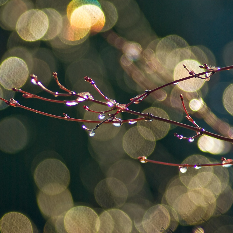 winter sun bokeh