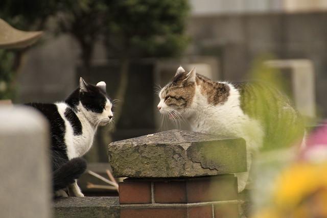 東京スカイツリーを求めて