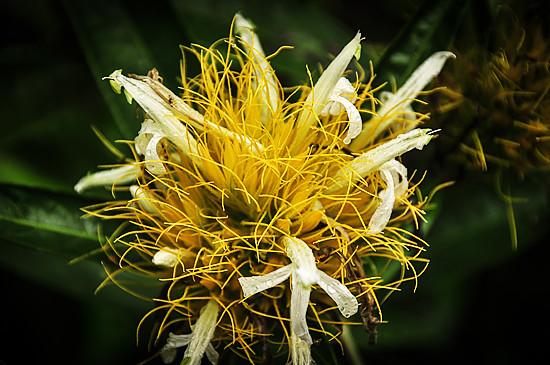 6979847319_ecb48149aa_z Jardin Botánico del Quindío - Armenia, Colombia Colombia Zona Cafetera  Zona Cafetera Quindio Nature Mariposario Guadua Garden Colombia Butterfly Botanical Bamboo