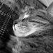 My Sleepy Boy, April 29, 2012