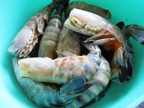 Sibu's freshwater prawns