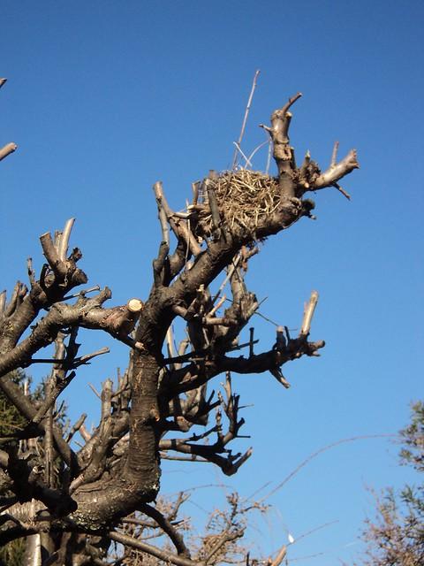Nest at my nest