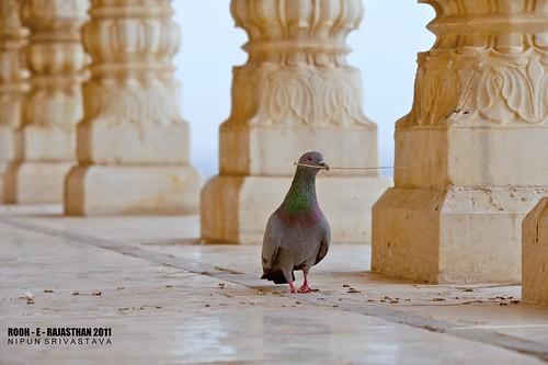 Peace. Jaswant Thada.