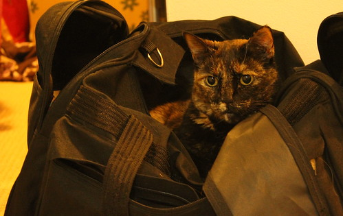 Licorice in the luggage